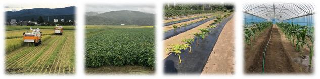 米ファーム斐太で育てている作物たち