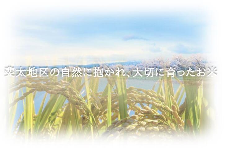 斐太地区の自然に抱かれ、大切に育てたお米